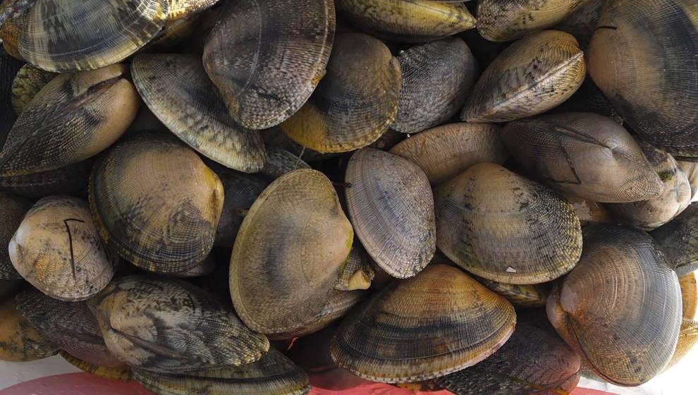 Cantabria prohíbe la extracción y comercialización de moluscos por marea roja