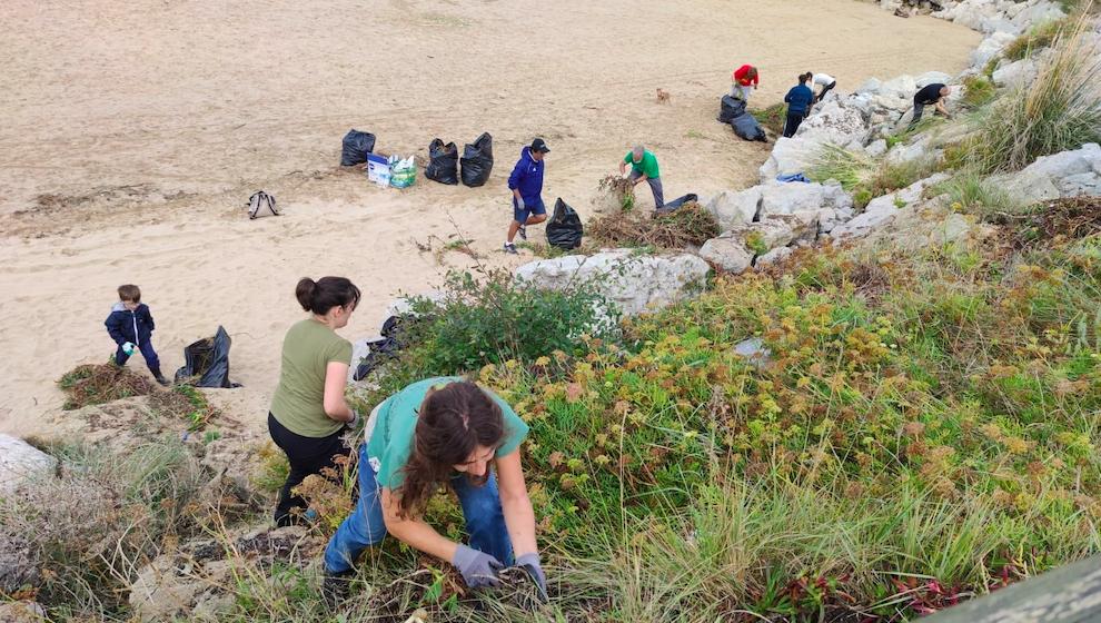 Voluntarios retiran una tonelada de plantas invasoras de la playa de Marzán